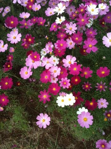 miya2_20111029101248.jpg