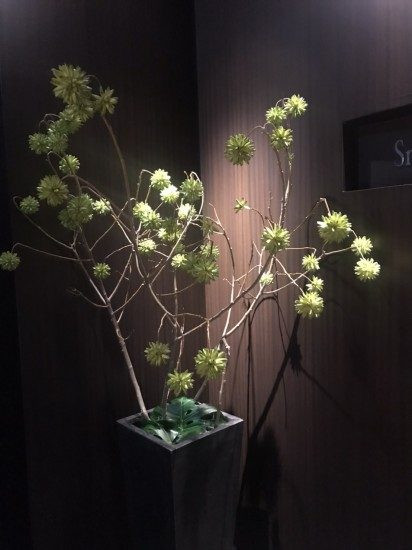 エテルニータのお花